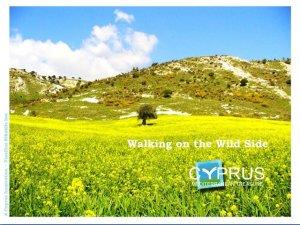 Wild Cyprus